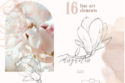 Magnolia flower line art clipart. Line drawing, PNG files
