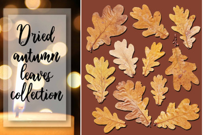 Dried autumn leaves collection png
