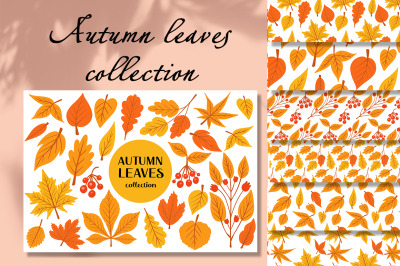 Autumn leaves and berries set