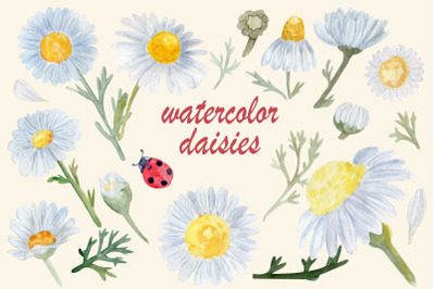 Watercolor flowers daisy png, Pressed floral clipart