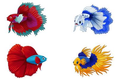 Set of Four Siamese Fighting Fish Bundle