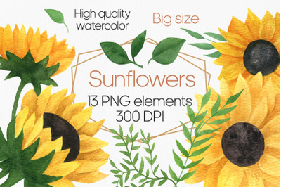 Sunflower watercolor clipart, sunflower PNG
