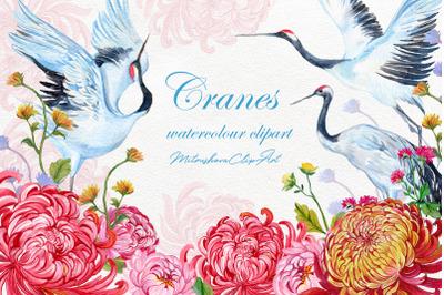 Cranes watercolor clipart