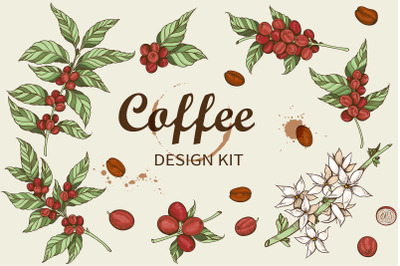 Coffee Plants and Coffee Beans