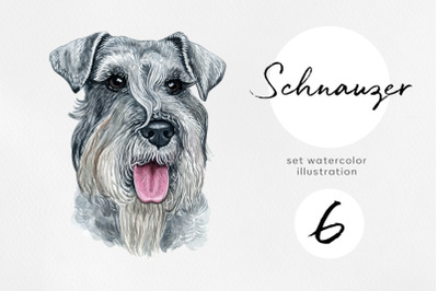 Schnauzer. Watercolor set dogs illustrations. 6 dogs