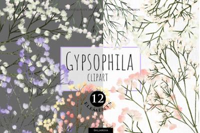 Gypsophila clipart