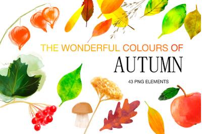 Digital Watercolor Autumn Clipart, Fall Leaves clipart