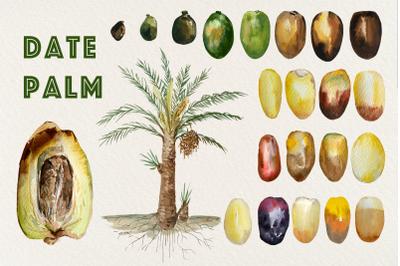 Date Palm - Watercolor Clip Art
