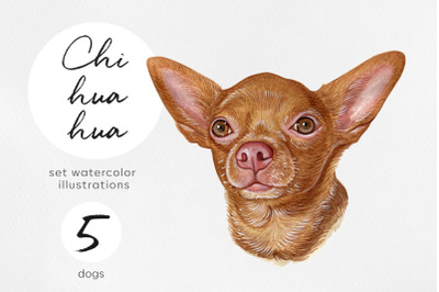 Chihuahua. Watercolor set dogs illustrations. 5 dogs
