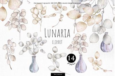 Lunaria plant clipart