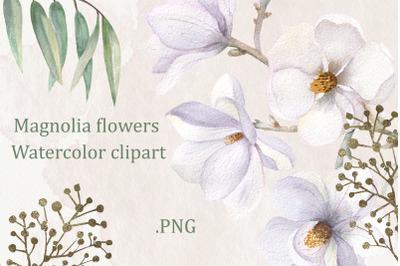Magnolia flowers. Watercolor clipart