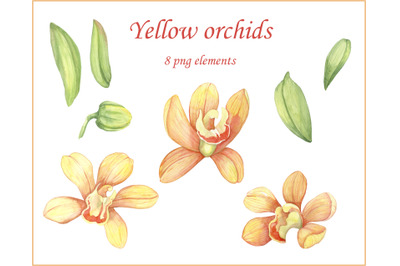 Watercolor hand painted flower yellow orchids