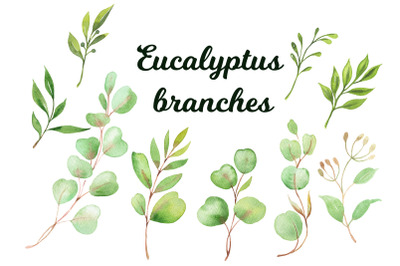 watercolor hand painted Eucalyptus branches Clipart