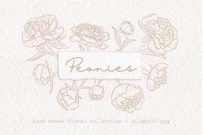 Peonies   Hand drawn flowers