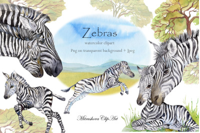 Zebras Watercolor set