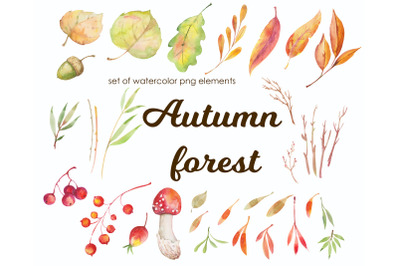 Autumn leaves and berries watercolor clipart