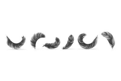 Black feathers. Realistic bird swan or goose silhouettes, fluffy 3D so