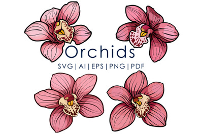 4 pink orchid flowers