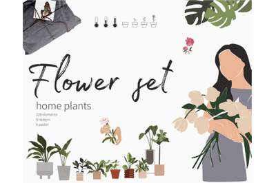 Flower collection, home plants, Monstera Palm Aloe, home decor