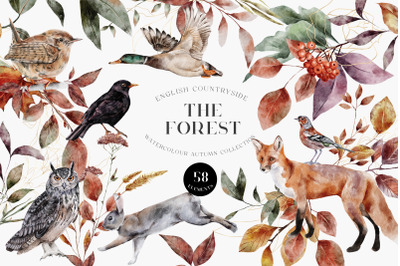 Autumn Forest Animals and Birds Watercolor PNG Leaves Twigs