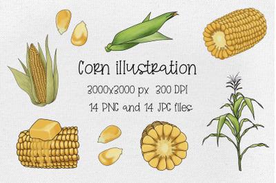 Corn illustration.Golden maize harvest.Cartoon food 14 files