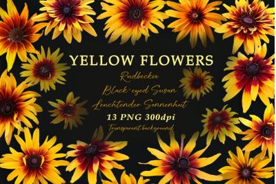 Yellow flowers. Cut elements.