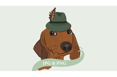 Dachshund dog, Wiener dog, sausage dog with feather hat.