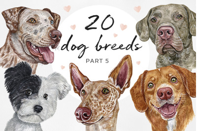 PART 5. Big watercolor illustrations set DOG breed. Cute 20 dogs.