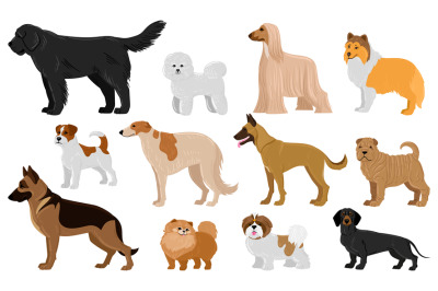 Cartoon puppy dogs breeds pets cute characters. Dachshund, shepherd, m