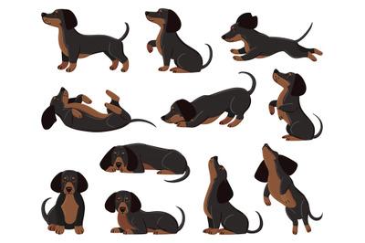 Cute cartoon dachshund dog breed in various poses. Dachshund adorable
