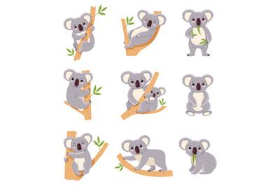 Cute koala. Funny australia animals collection, fluffy gray mini bear