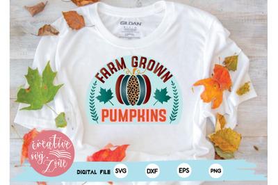 farm grown pumpkins