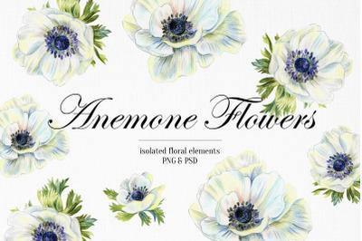 Wedding set of anemone flowers drawings