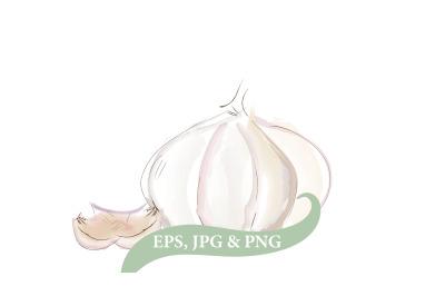 Garlic clipart, Vegetable Watercolor Vintage Illusutration