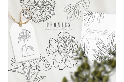 Peony flower line art clipart. Hand drawn PNG, EPS outline