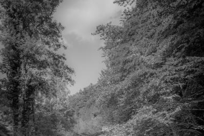 River / Trees / Black & White