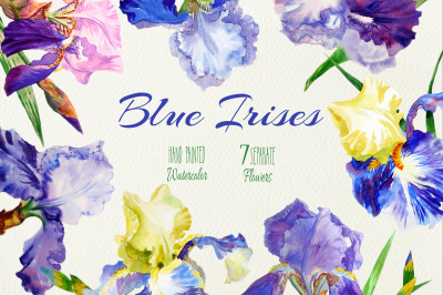 Blue Irises.  Watercolor clip art