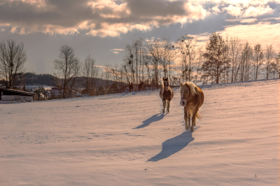 Horses at the country