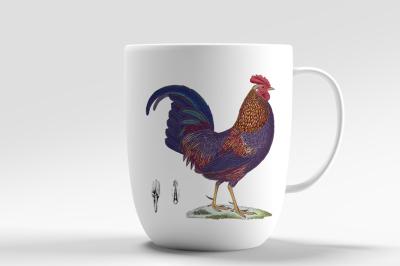 Sonnerat Rooster Vintage Birds