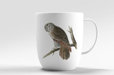 Owl Vintage Great Cinereous Owl