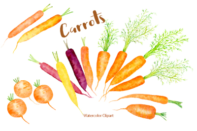 Watercolor Carrot Illustration