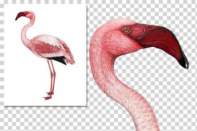 Flamingo Vintage Watercolor Pink Birds