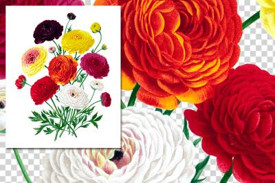 Ranunculus Bouquet Double French Vintage Watercolor Flowers
