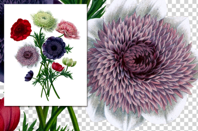 Poppy Anemone Bouquet Vintage Watercolor Flowers