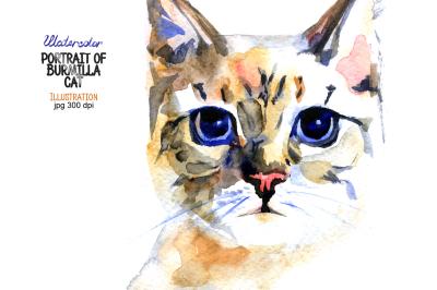 Watercolor portrait of Burmilla cat