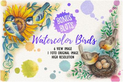 watercolor birds vol.2