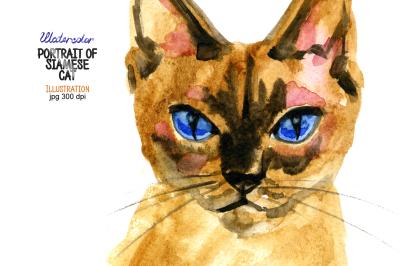 Watercolor portrait of Siamese cat