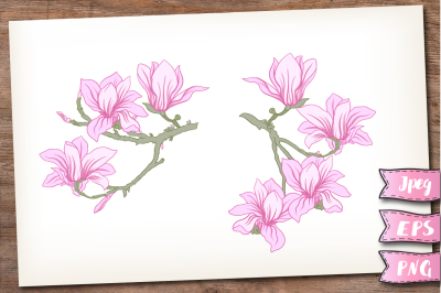 Blooming magnolia set