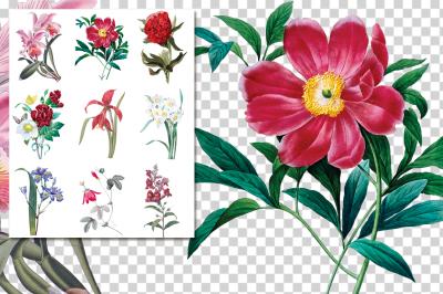 Vintage Watercolor Flowers Collage 01