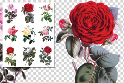 Roses Collage 01 Vintage Watercolor Flowers